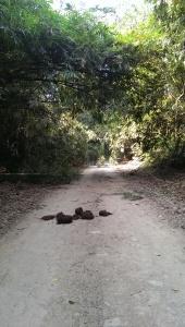 Elephant poo on the roads we would often walk