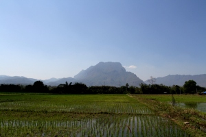 Doi Chaing Dao from the Chaing Dao rice paddies