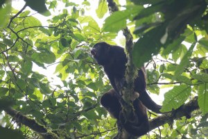 Howler monkeys and ... yeah.