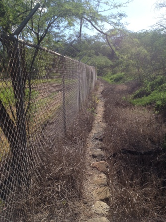 Trail along fence