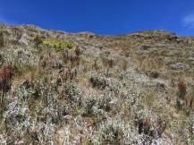 Flowers along the hike