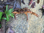 Forest Crab!