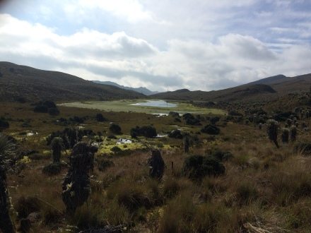 Marshland at Sumapaz