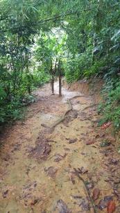 Walking the muddy trails between rain showers