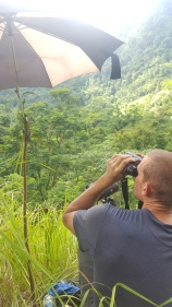 Scanning the hillside for hornbills