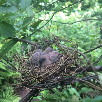 baby Emerald Doves seen on the hike up
