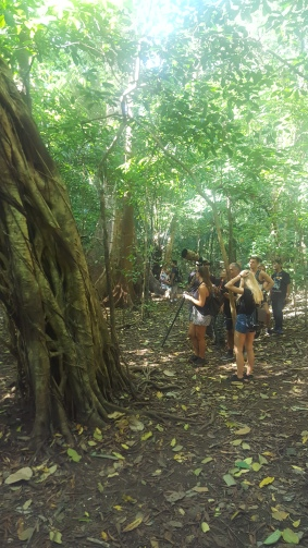 """Tarsier Tree"" and audience"