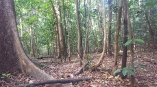 View from the trails of Tangkoko