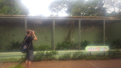 Birding while looking at caged birds