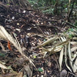 Look closely, here's one of the snare traps that was set up around the mound!