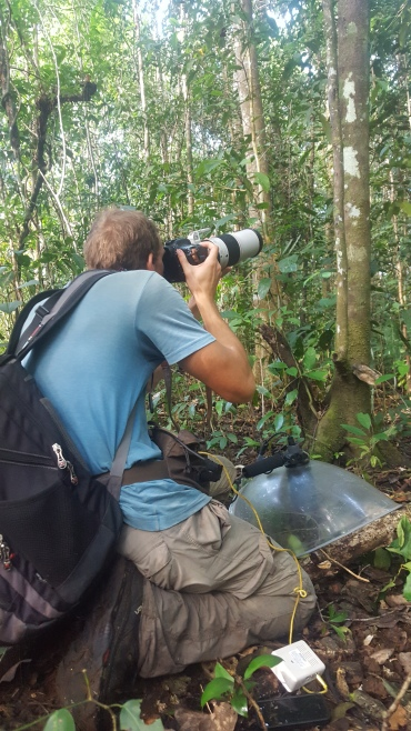 Ross photographing a Papuan Pitta
