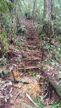 Newly made steps at New Camp