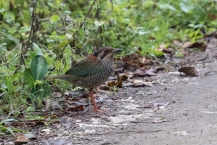 Scaled Ground Roller