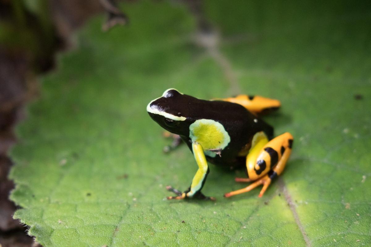 Madagascar - Andasibe - The Real Life Zoo