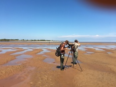 Scanning for plovers